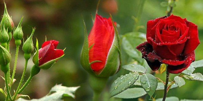 Лучшая стадия зрелости цветов