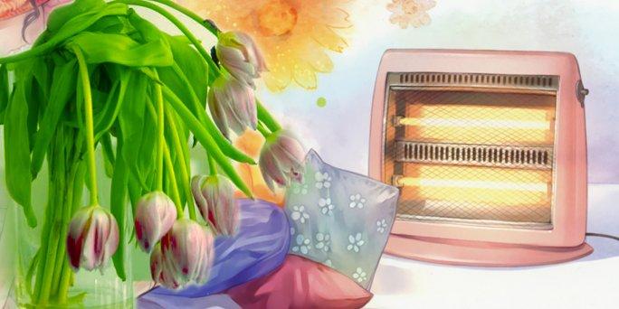 Жизнь цветов под солнечными лучами и около обогревателя