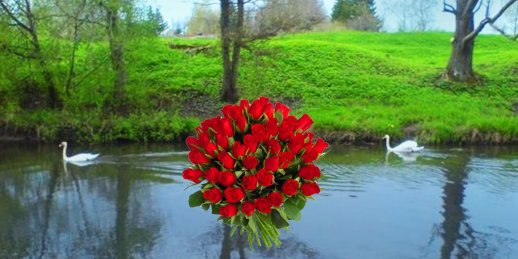 Ziedu piegāde Užava (Latvija). Nopirkt ziedus užavā