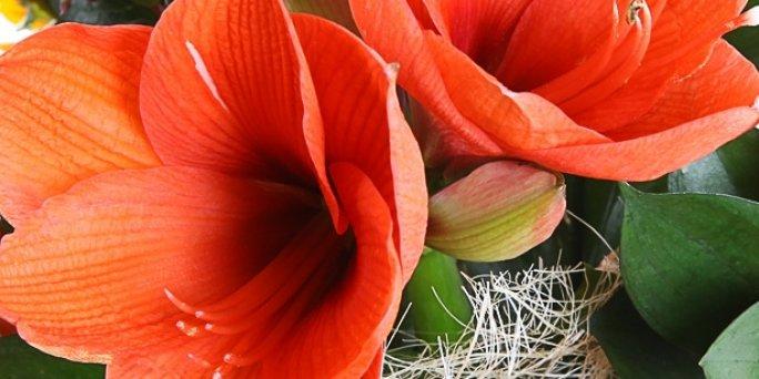 Ziedu piegāde Ada (Latvija). Nopirkt ziedus Adā