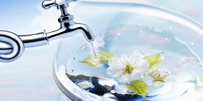 В какой воде должны стоять цветы