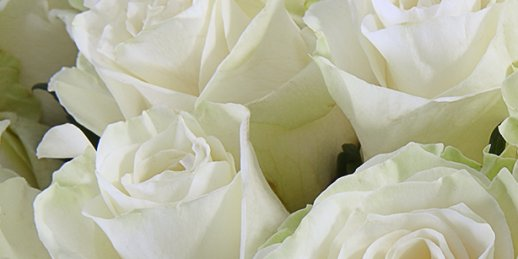 A classic bouquet of 19 roses, 60 cm long with delivery in Riga