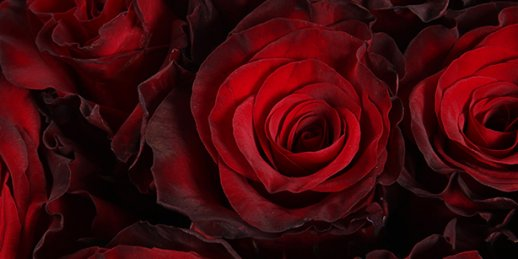 Order 40 red roses favorably with delivery to Riga and any city in Latvia