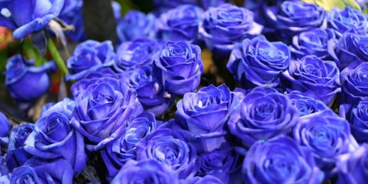 Blue flowers for bouquets at a bargain price in the online shop KROKUS.