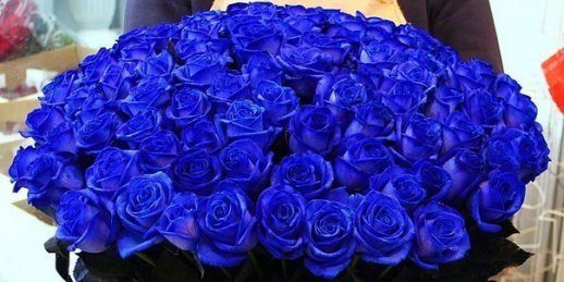 Order delivery of a bouquet of blue roses to Riga or another city of Latvia in KROKUS.