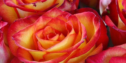 Kur imantā var nopirkt lētu ziedu pušķi ar piegādi