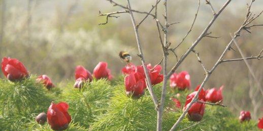 Nopirkt skaistus savvaļas ziedus Rīgā un citās Latvijas pilsētās