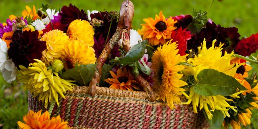 Pasūtīt rudens ziedus interneta veikalā KROKUS