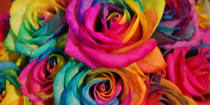 Nopirkt varavīksnes rozes ar piegādi Rīgā