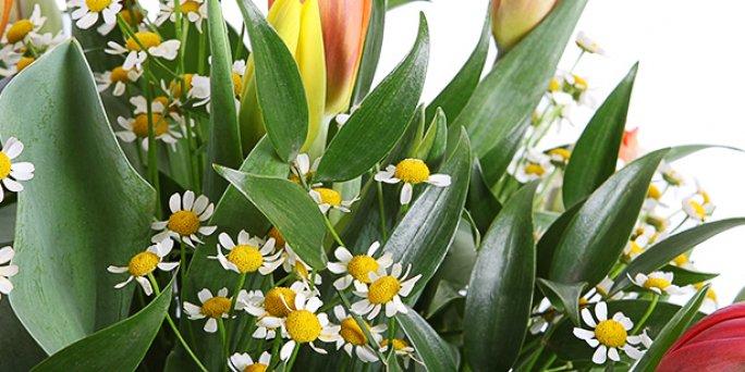 Kā izsekot ziedu pasūtījuma eksprespiegādi Rīgā un citur Latvijā