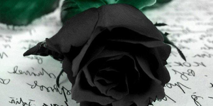 Vienas melnas rozes piegāde Rīgā. Melnas rozes uz gara kāta piegāde