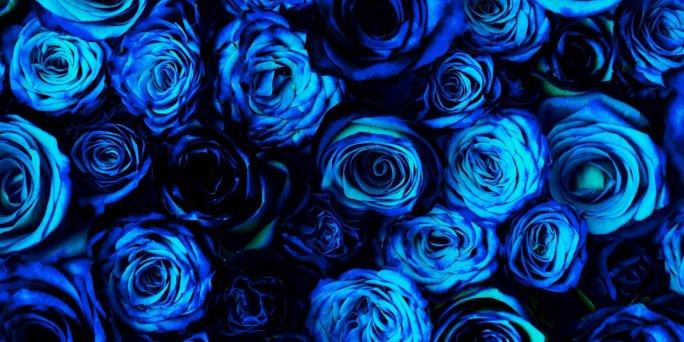 Zilās rozes ar piegādi Rīgā – ātra zilo rožu pasūtījuma piegāde