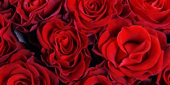 Lēta ziedu piegāde tajā pašā dienā. Ziedi jūsu mājās pēc 2-3 stundām
