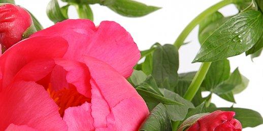 Ziedu abonementa noformēšana. Ziedu abonements korporatīviem klientiem