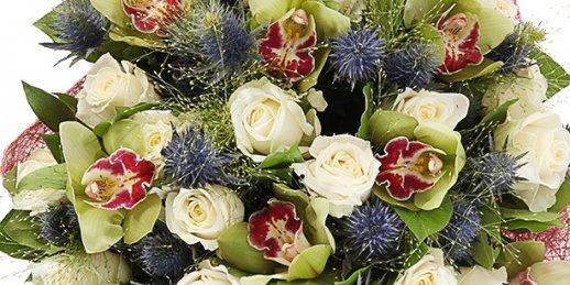 Rožu duča piegāde jebkurā daudzumā Rīgā. Pušķis no divpadsmit rozēm.