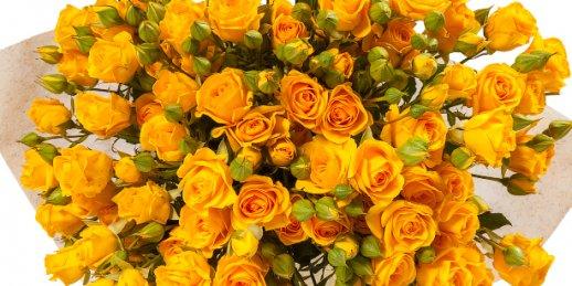 Pirkt lētus vasaras ziedus. Labākie vasaras ziedi ar piegādi Rīgā