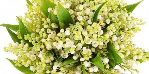 Nosūtīt ziedus dzimšanas dienā , ar studijas ''Krokus'' servisa palīdzību