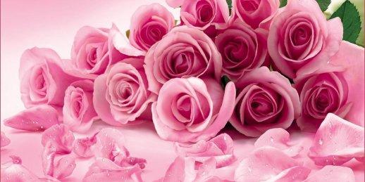 Pasūtiet vienas rozā rozes piegādi Rīgā un citās Latvijas pilsētās