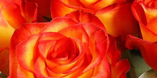 Nosūtiet ziedus uz dzimšanas dienu internetā par izdevīgu cenu