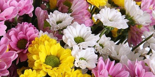 Iegādājieties ziedus un šokolādes Mātes dienā ar piegādi Rīgā (Latvija)