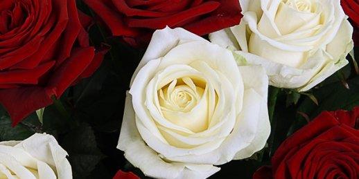Ātra ziedu piegāde uz Rīgu uz jebkuru citu adresi 2-3 stundu laikā!