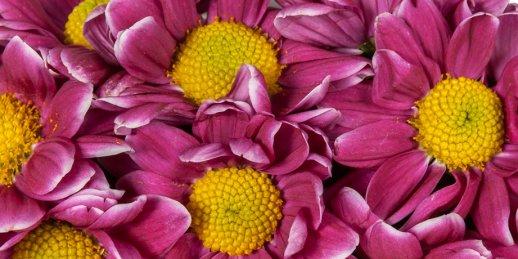 Lētu ziedu piegāde ar piegādi tajā pašā dienā uz jebkuru adresi Rīgā
