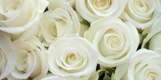 Pušķis no 101 elegantas baltas rozes Rīgā vai citā Latvijas pilsētā
