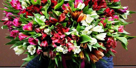 Alstromēriju pušķis par labāko cenu Latvijā floristikas studijā KROKUS