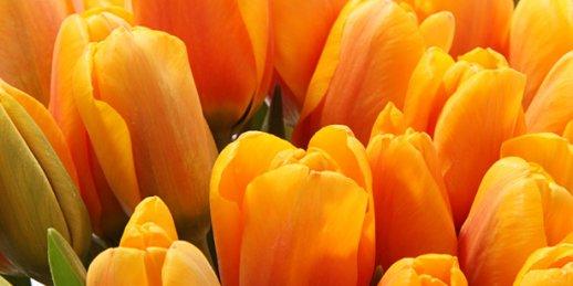 Nosūtīt ziedus Rīgā un Latvijas pilsētās ātri, kvalitatīvi un lēti