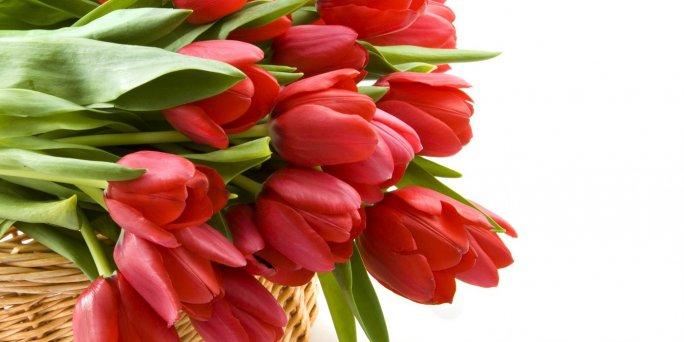 Тюльпан сегодня — это удивительная история прошлого и настоящая история заказа и покупки больших букетов тюльпанов в Риге