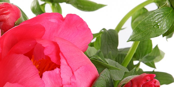 Доставка цветов Рига: Оформление цветами.