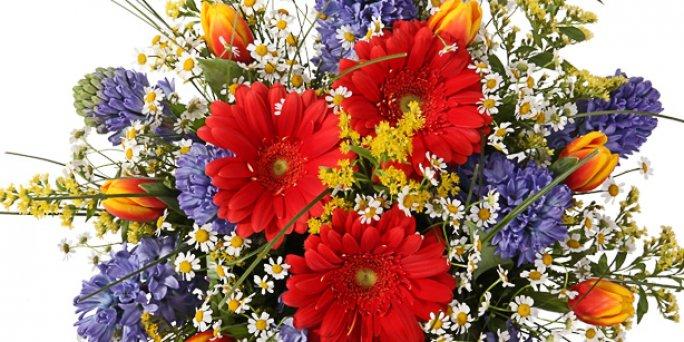 Доставка цветов Рига: Самые любопытные факты о комнатных цветах.
