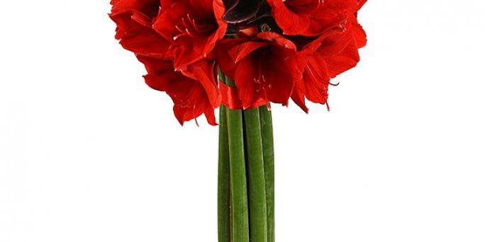 Ищете прикольный подарок? Закажите цветы с доставкой в Риге!