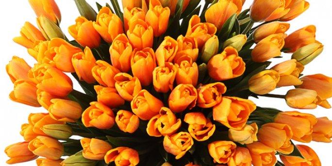 Как приобрести цветы в Риге: гортензия .