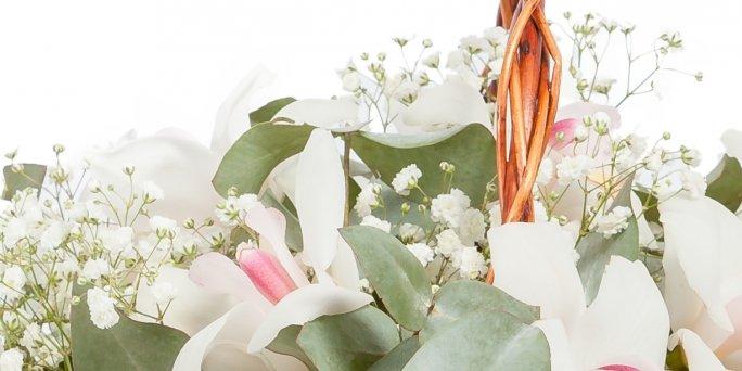 Заказать цветы в Риге: амарилис.