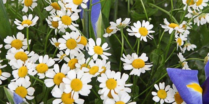 Доставка цветов Рига: Что подарить девушке?