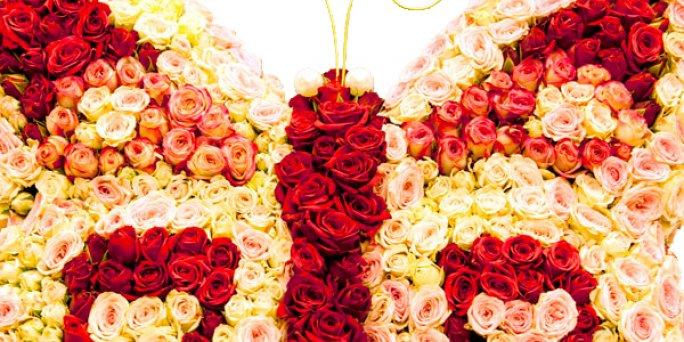 Заказать цветы в Риге: Комнатные растения - Лучшие предложения от фитодизайнеров.