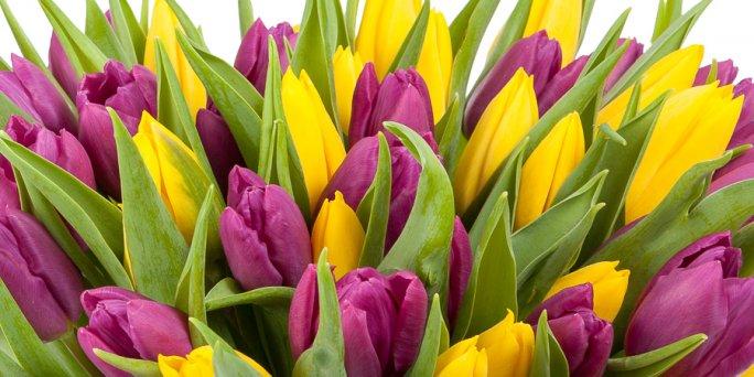 Купить цветы в Риге: живая игрушка цветы.