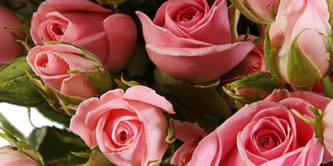Купить цветы в Риге: Фитодизайн - Лучшие предложения от флористов.