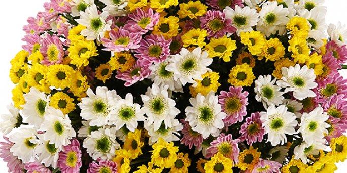 Доставка цветов Рига: Комнатные цветы и растерия в Риге.