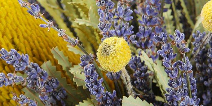 Доставка цветов Рига: Самые популярные факты о комнатных растениях.