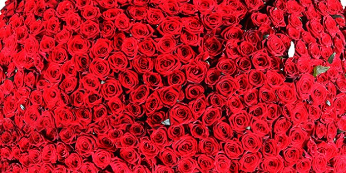 Заказ цветов Рига: Что подарить отцу?