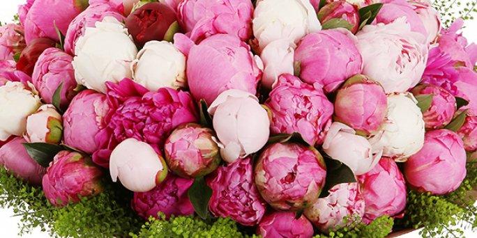 Появилось желание купить живые цветы для любимой женщины?