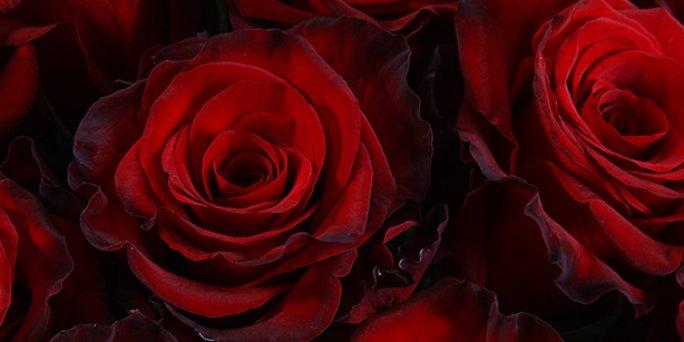 Что принимать во внимание, заказывая в доставку цветы в Риге?