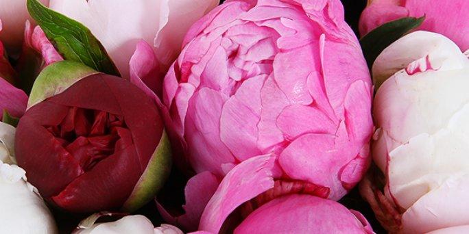 Доставка цветов Рига: Как выбрать запоминющийся подарок возлюбленной?