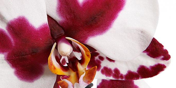 Купить цветы в Риге: Фитодизайн - пять полезных рекомендаций.