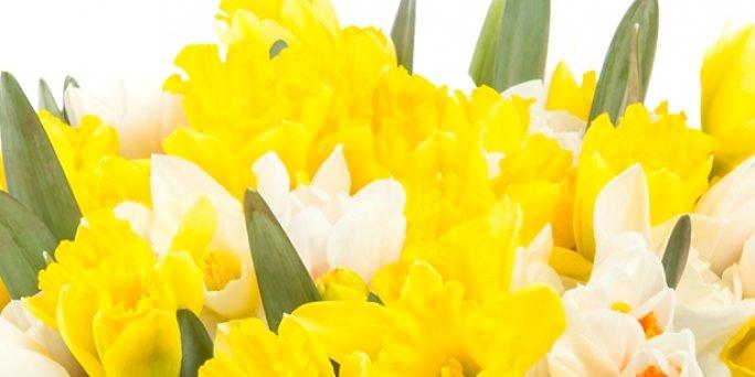 Что дарить и где заказать цветы с доставкой в Риге: цветы на первое свидание.