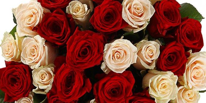 Заказать цветы в Риге: Комнатные растения - Советы профессионалов.