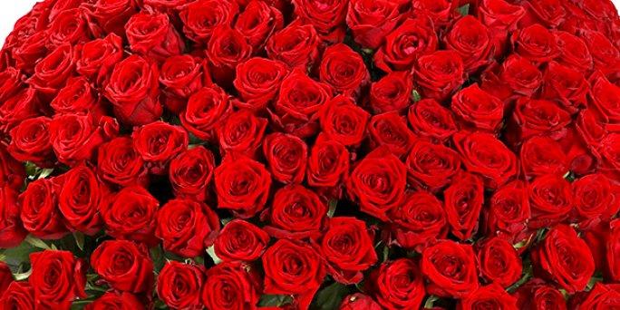 Доставка цветов Рига: букет из 21 тюльпана.