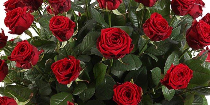Заказать цветы в Риге: Комнатные растения - шесть полезных рекомендаций.